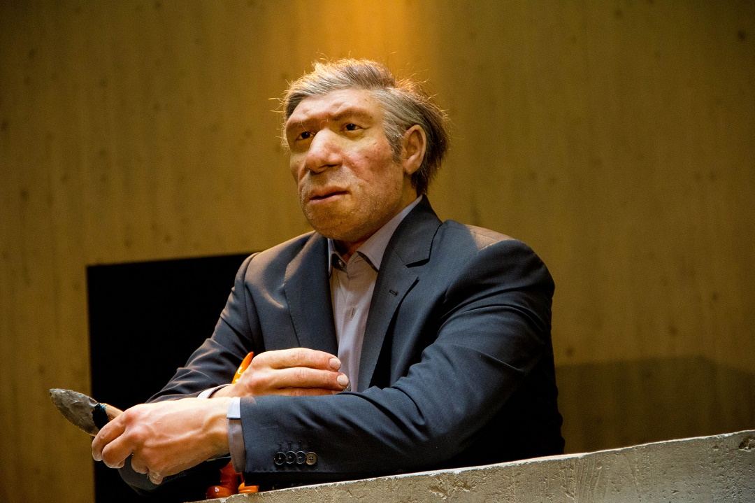 homo neanderthalensis the neanderthals Descriptions and articles about the neanderthal, scientifically known as homo neanderthalensis in the encyclopedia of life includes overview brief summary.