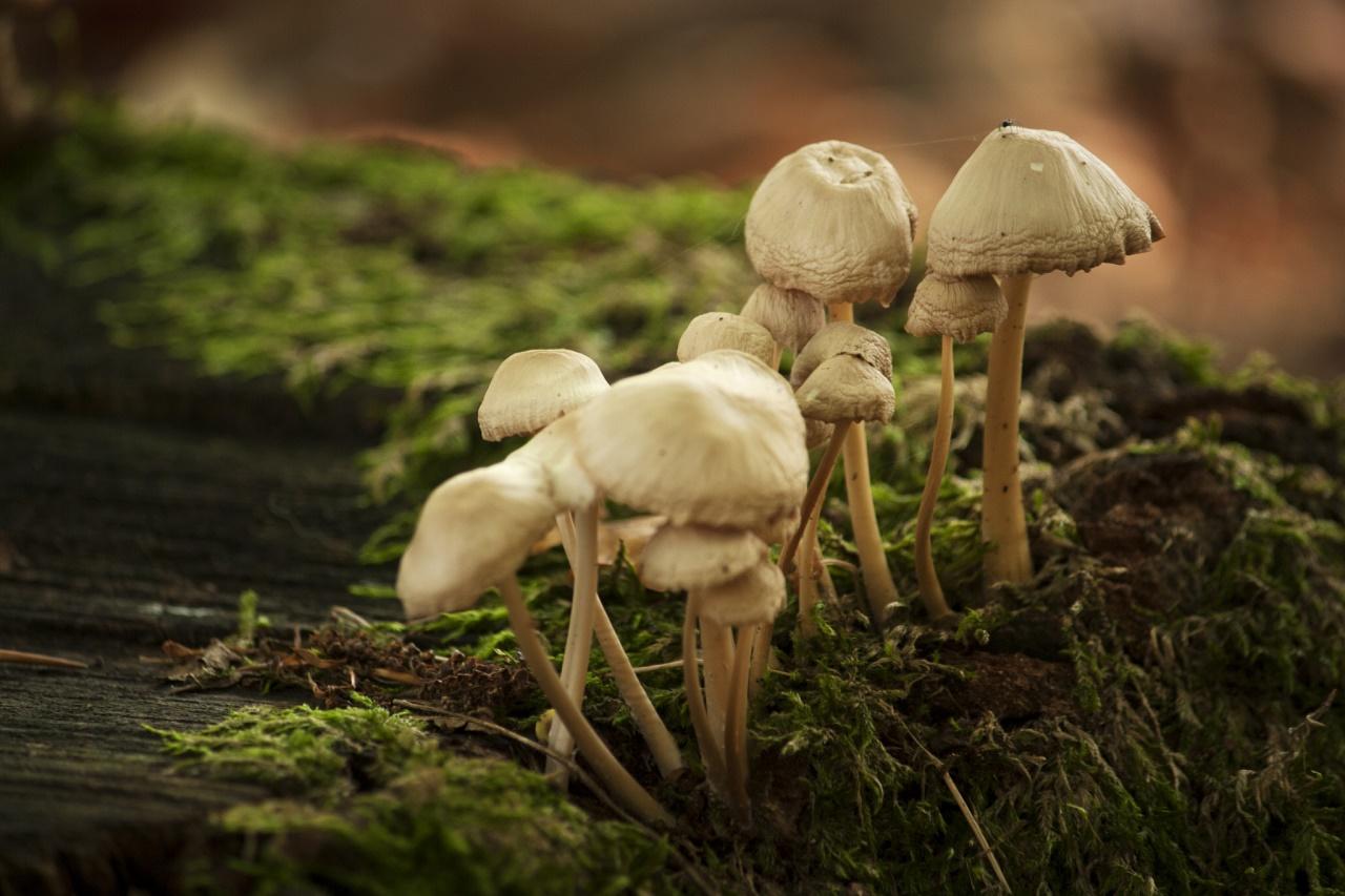 Photo credit: Kitty Terwolbeck / Flickr